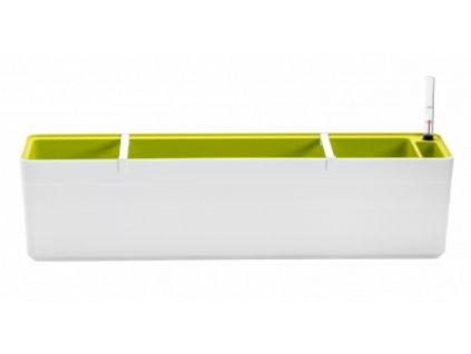 Hrantík Berberis biela zelená 80 cm