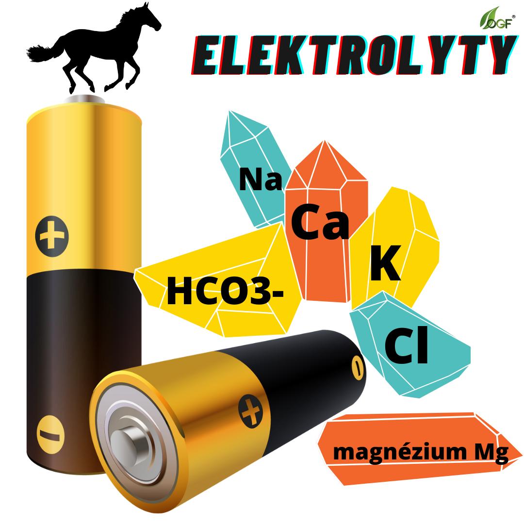 Prečo je koňom v lete dôležité dopĺňať elektrolyty?