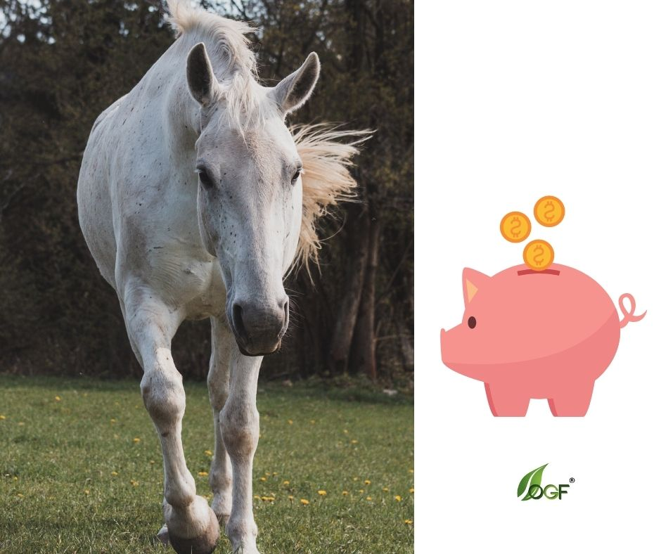 Koľko stojí kôň?  S akými výdavkami máte v prípade vlastného koňa rátať?