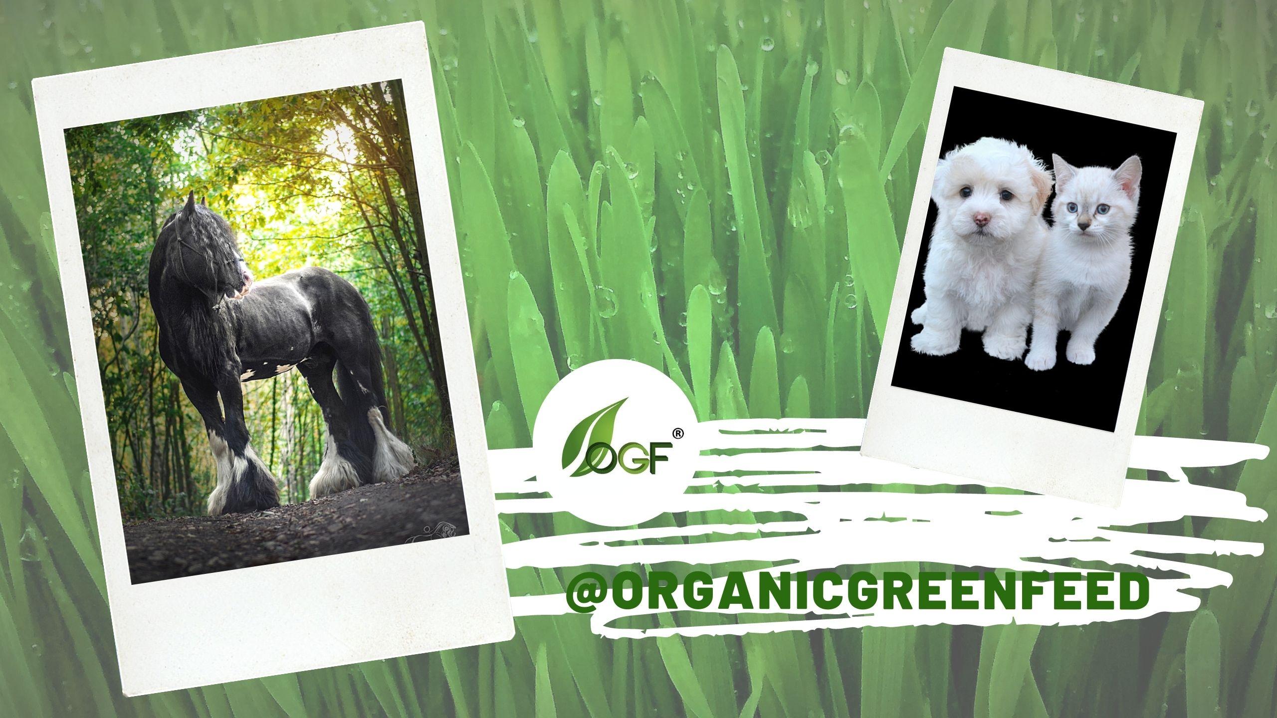 organicgreenfeed