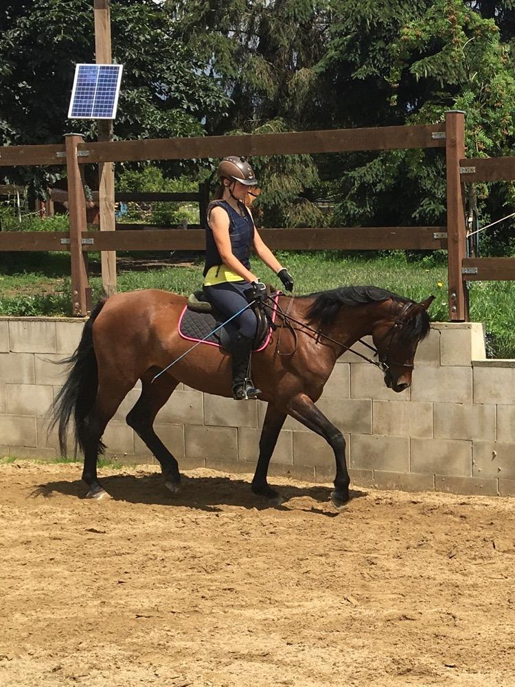 Výuka jízdy na koni