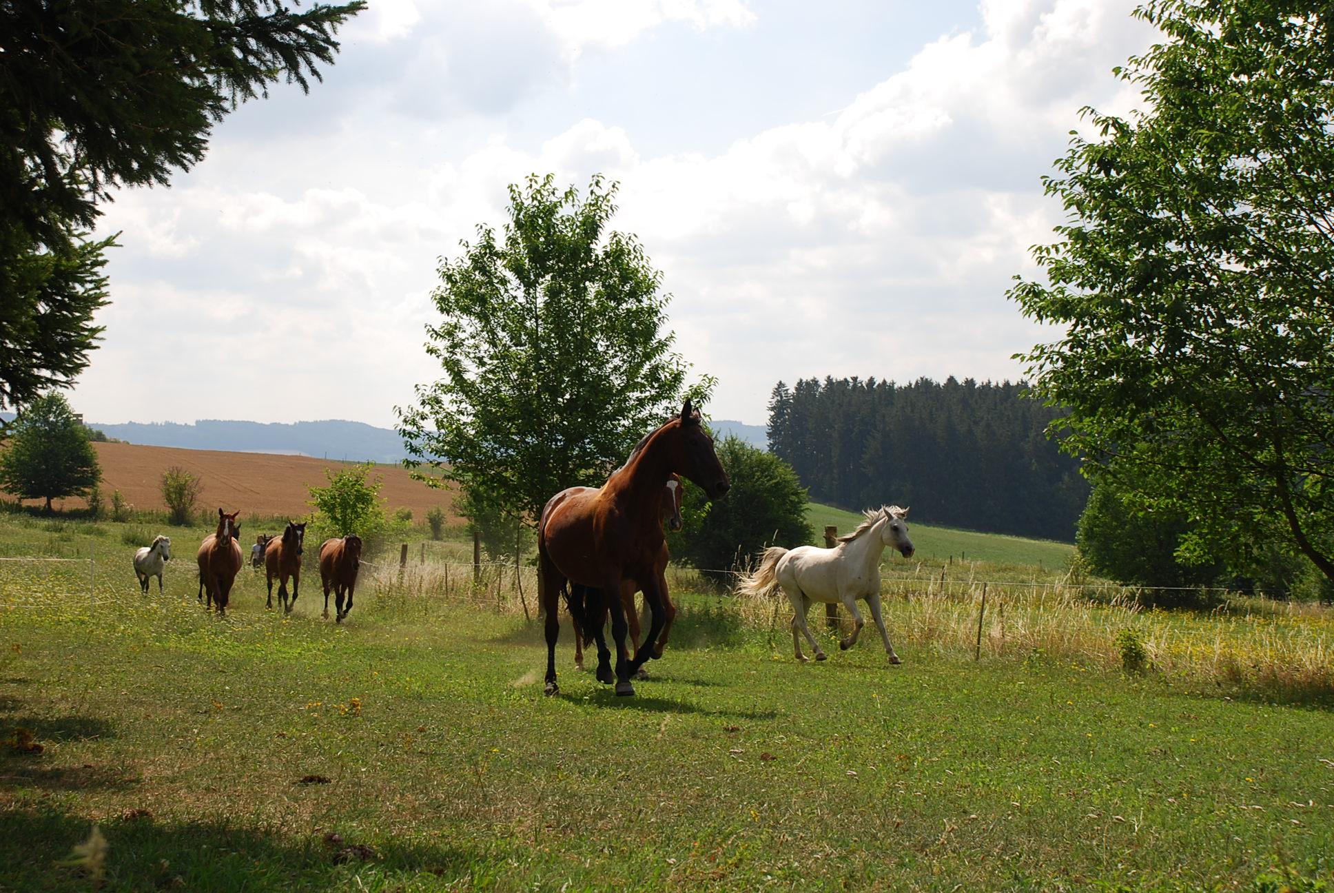 Způsob ustájení a život našich koní
