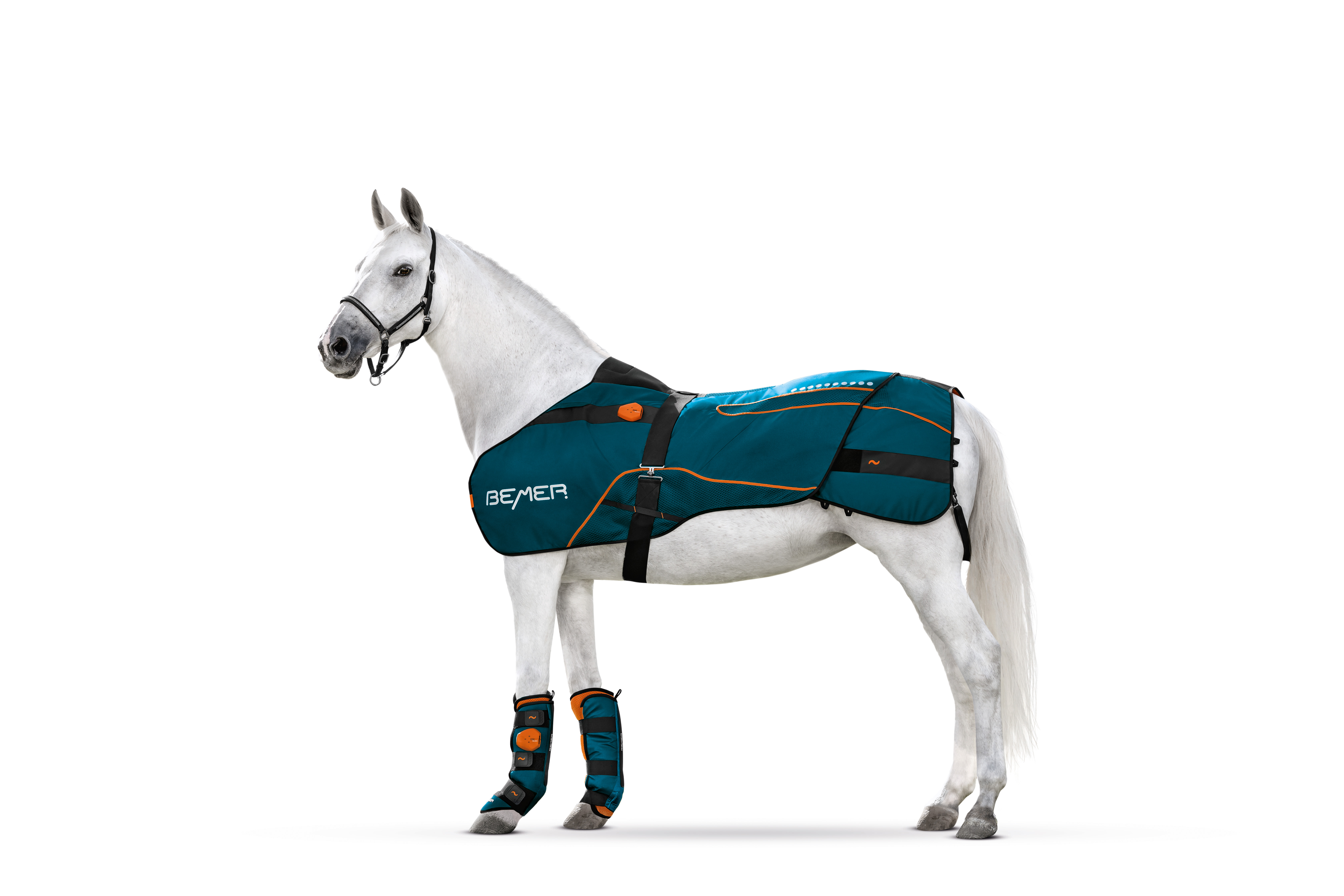 Bemer terapie pro koně