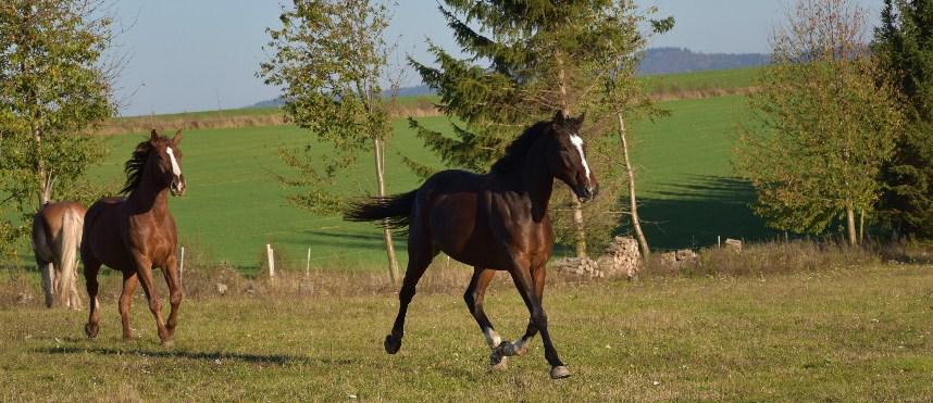 podzimní koně