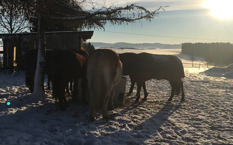 Zimní koně