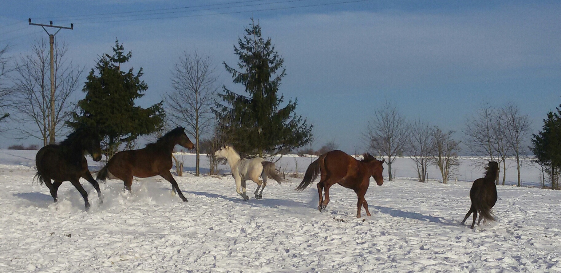 Zimní koně II