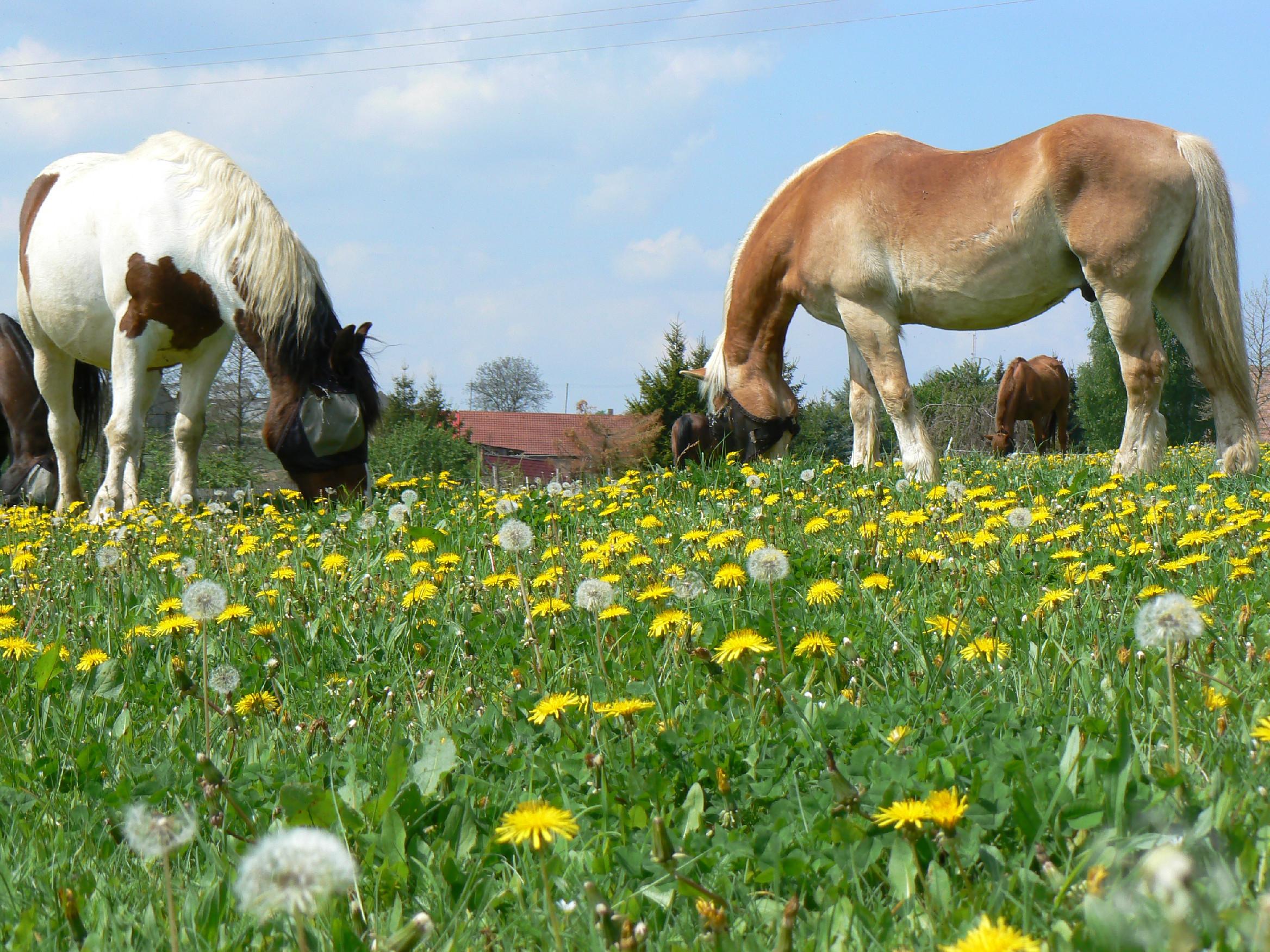 Jarní pobyty u koní