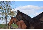 Podzimní prázdniny u koní