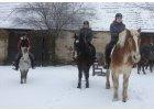 Zimní prázdniny u koní