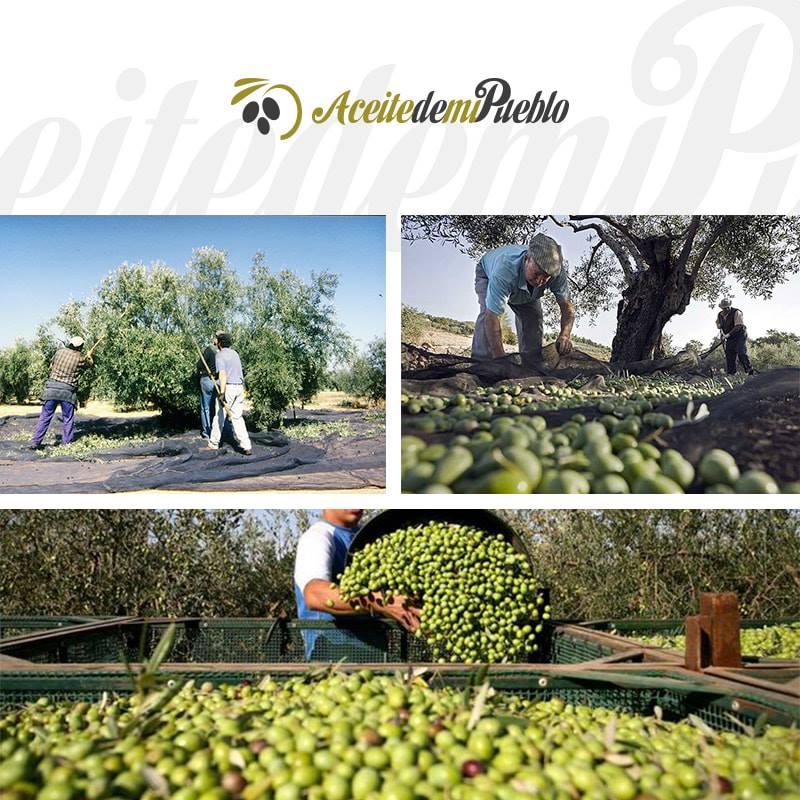 Certifikát kvality olivového oleja DonLope