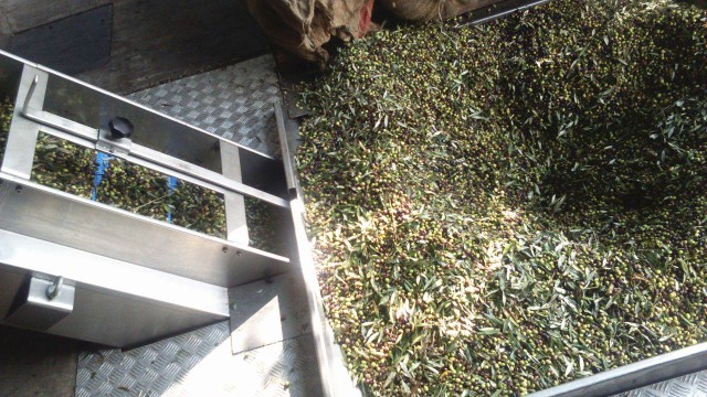 olives in the press