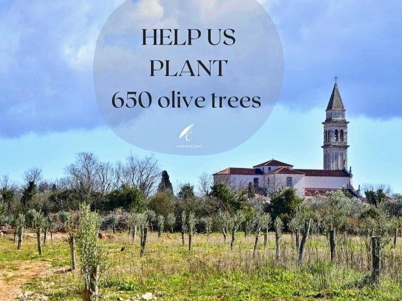 Nasaďte si svůj olivovník !