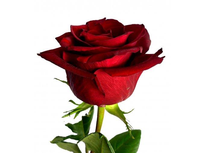 Kytice rudých růží 70 cm