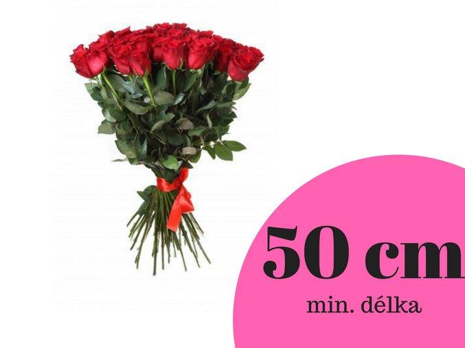 50 cm(5)