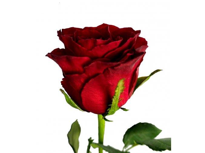 Kytice rudých růží 50 cm