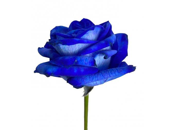 Kytice modrých růží 70 cm
