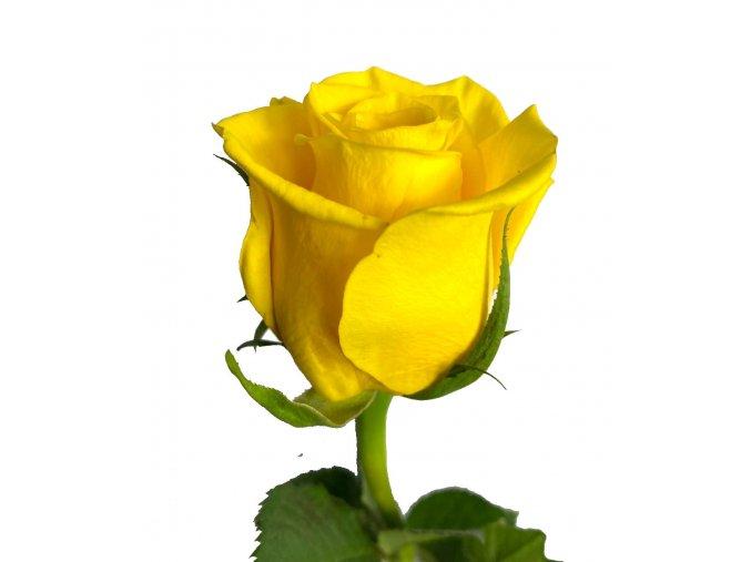Kytice žlutých růží 40 cm