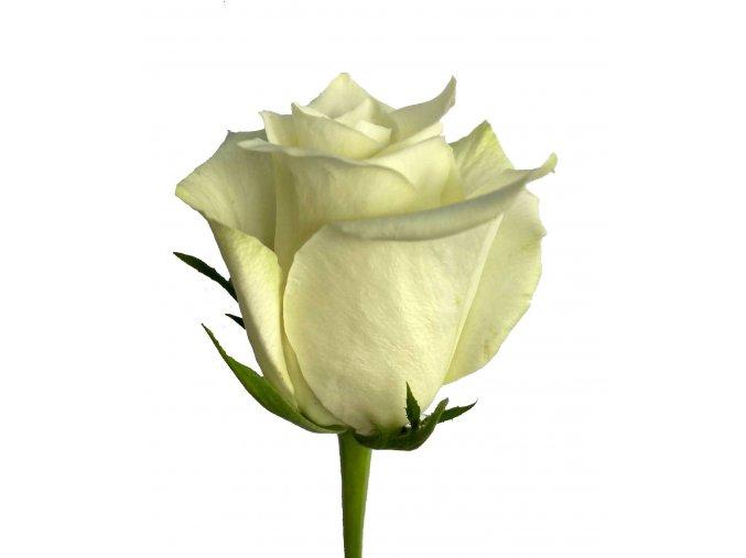 Kytice bílých růží 40 cm