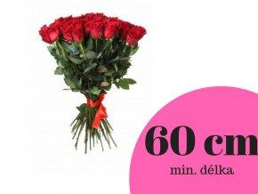 Růže červená 60 cm (ks)