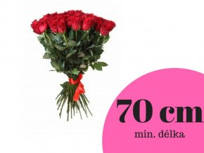 Růže červená 70 cm (ks)