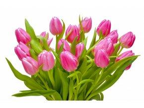 Tulipány růžové (Počet kusů 30ks)
