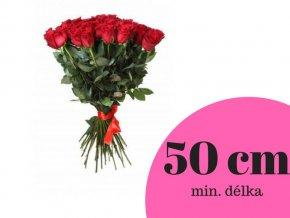 Růže červená 50 cm (ks)