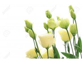 15598523 White Eustoma on white background Stock Photo