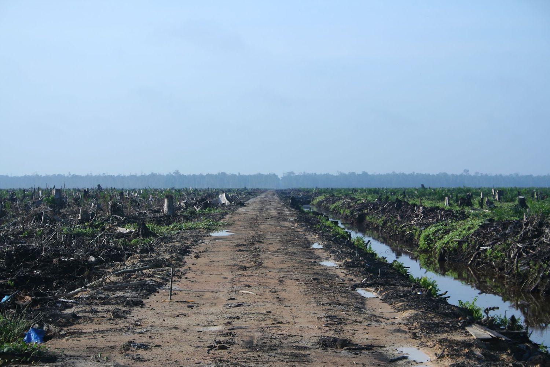 Ekologické dopady palmového oleje