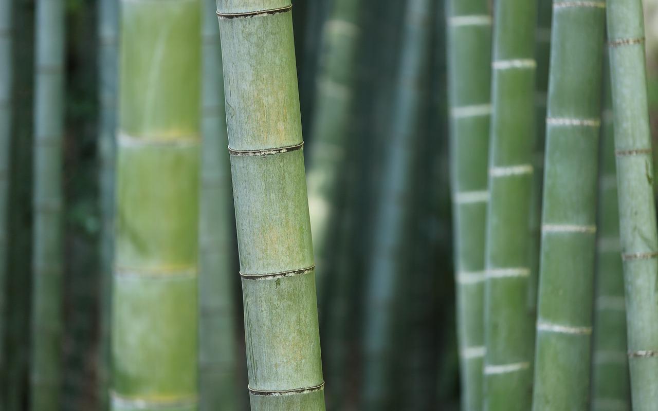 bambusovy-rakos-1