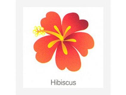 Fridge magnet Hibiscus