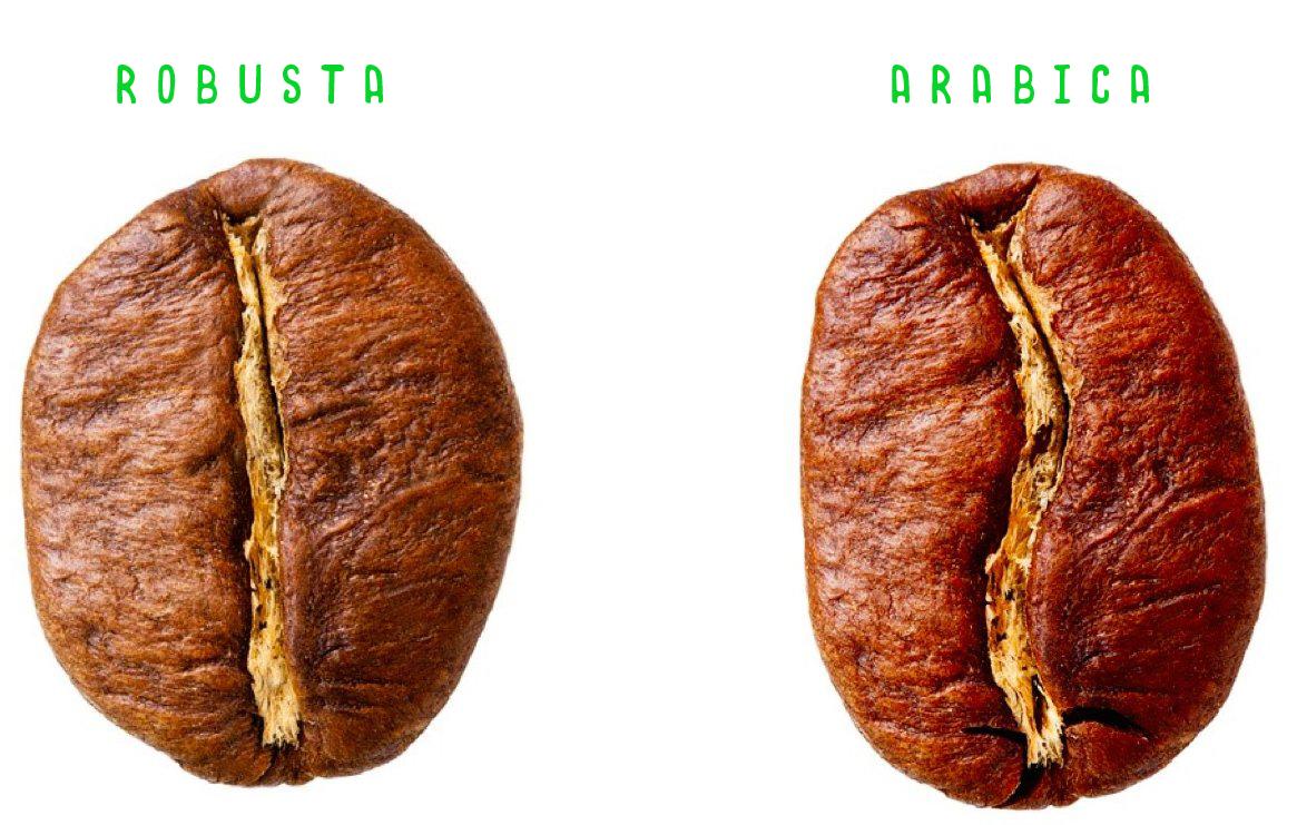 Arabica a Robusta