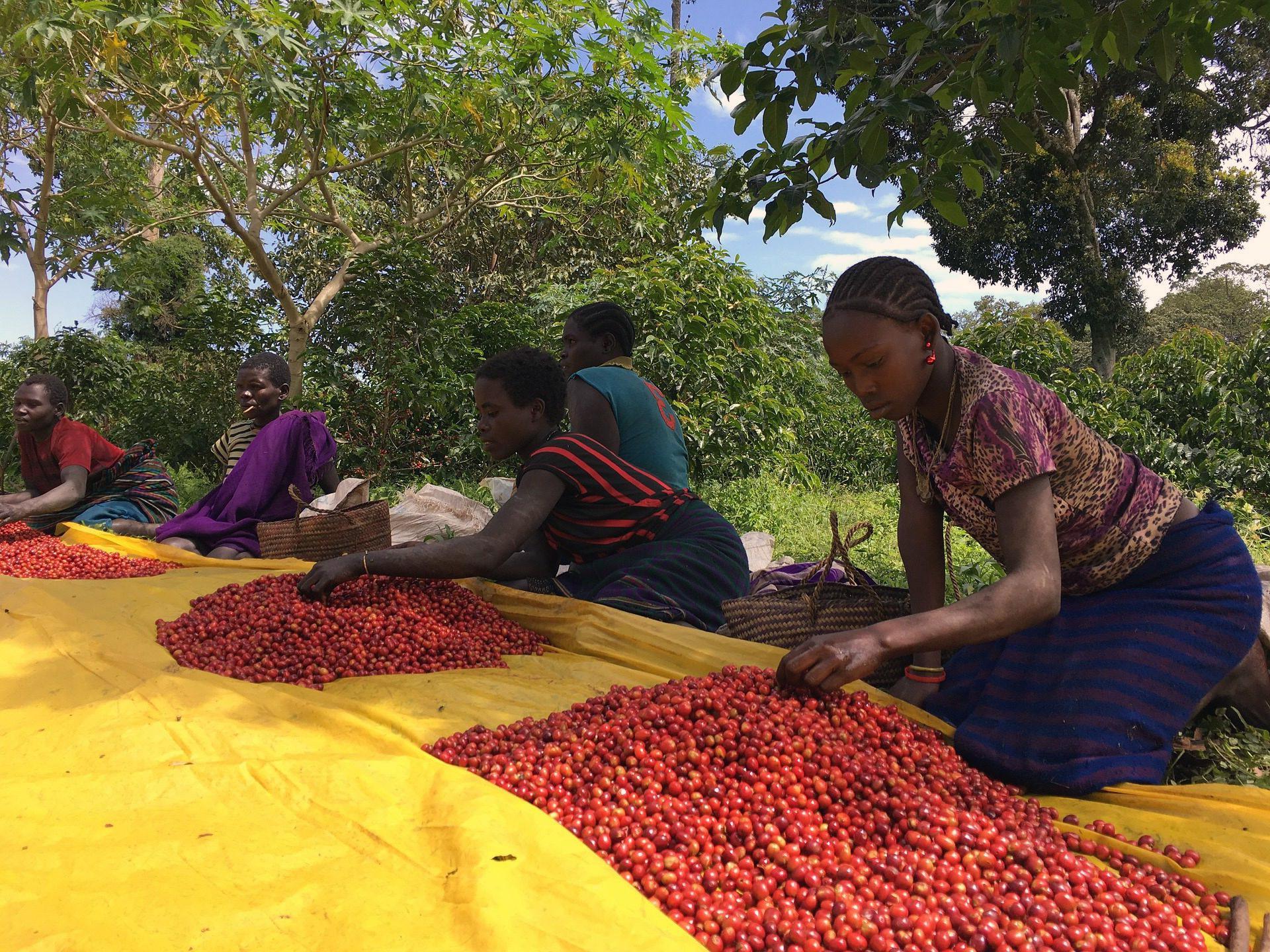 Etiopie, místo odkud pochází káva