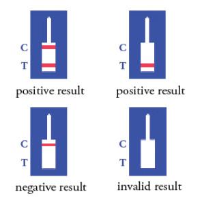 hCG-result-schematic-296x300