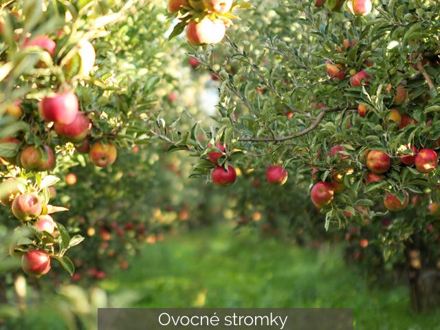 Prodej ovocných stromků
