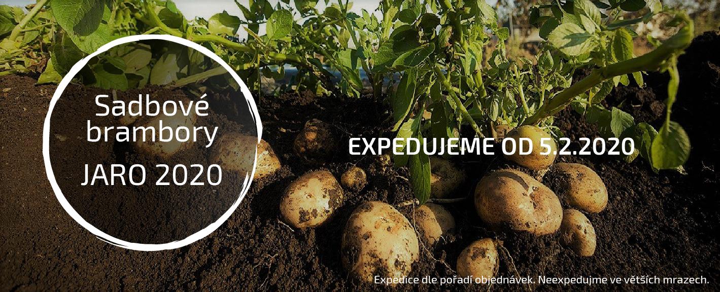 Sadbové brambory - jaro 2020
