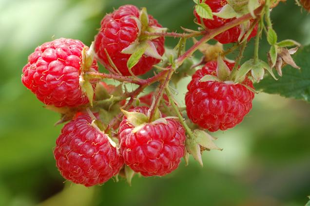 Drobné ovoce