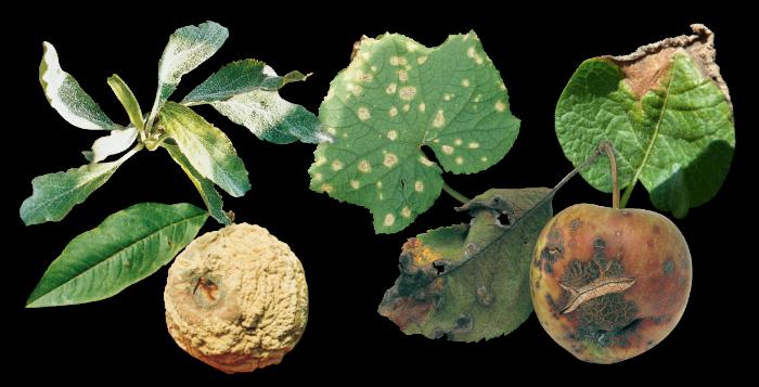 Houbové choroby a plísně