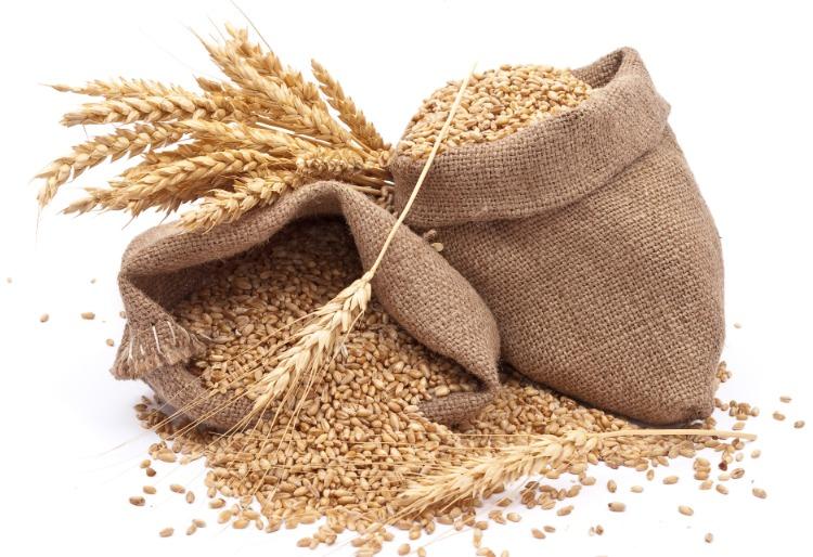 Krmné obilí