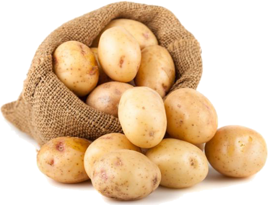 Pozdní brambory