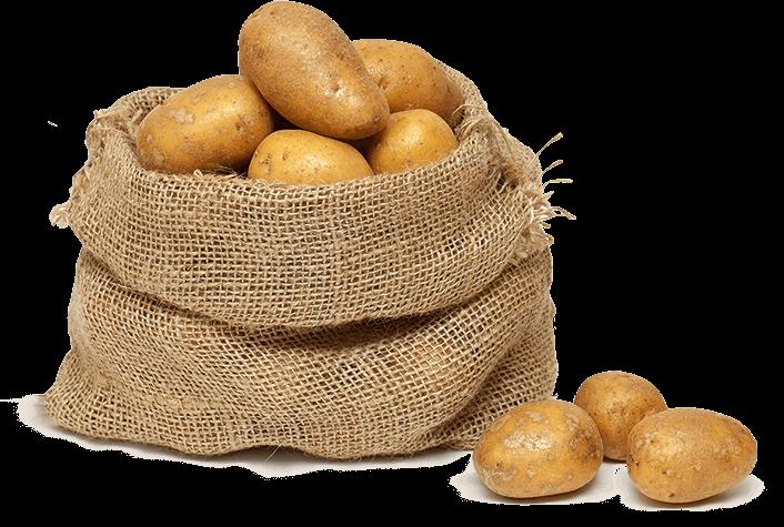 Velmi rané brambory