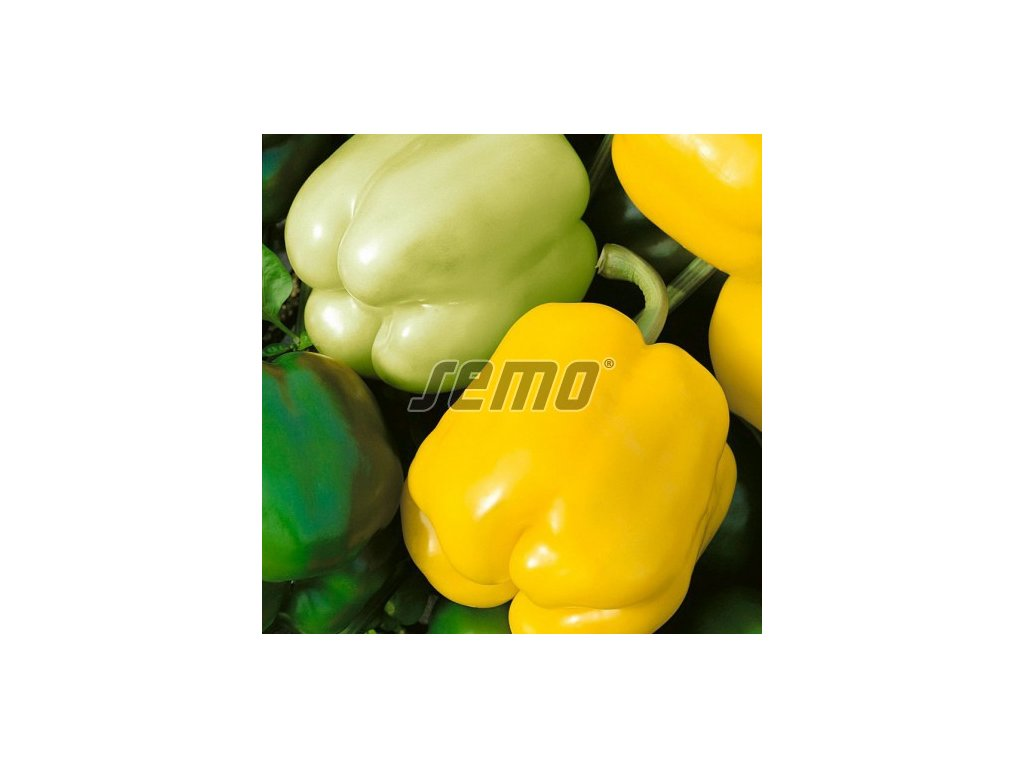 p2535 semo zelenina paprika rocni gelby 500x500