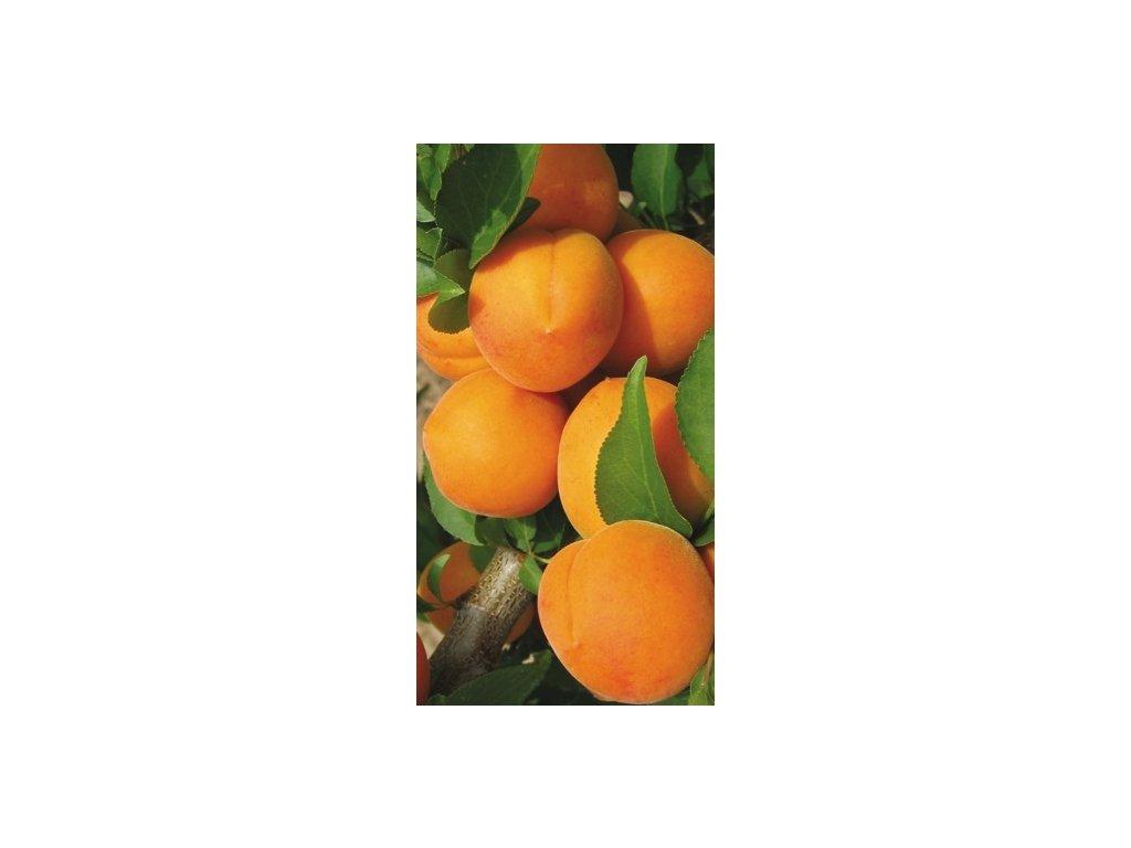 Ananaska meruňka