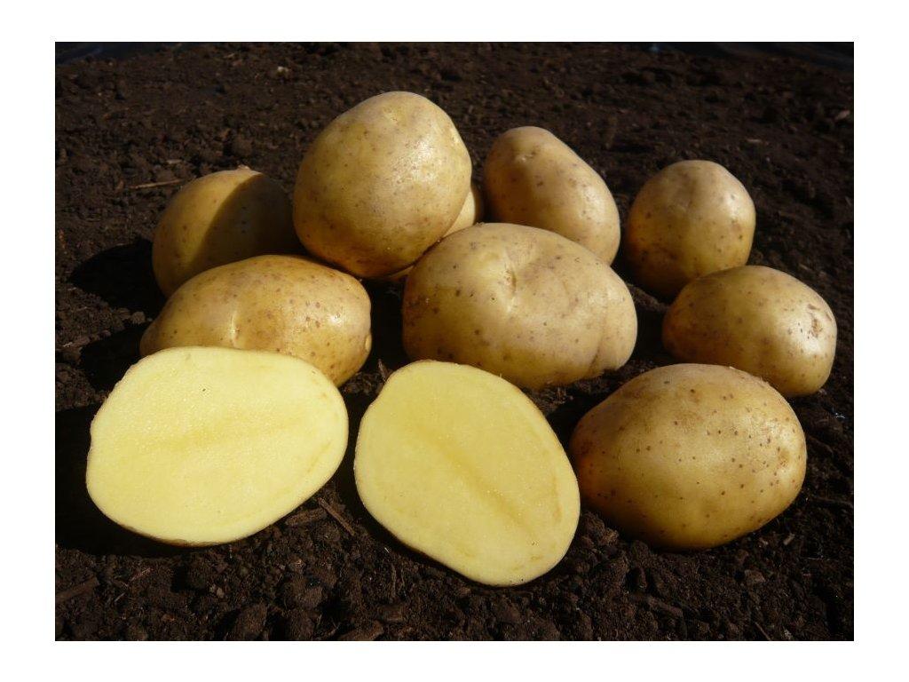 sadbové brambory adéla