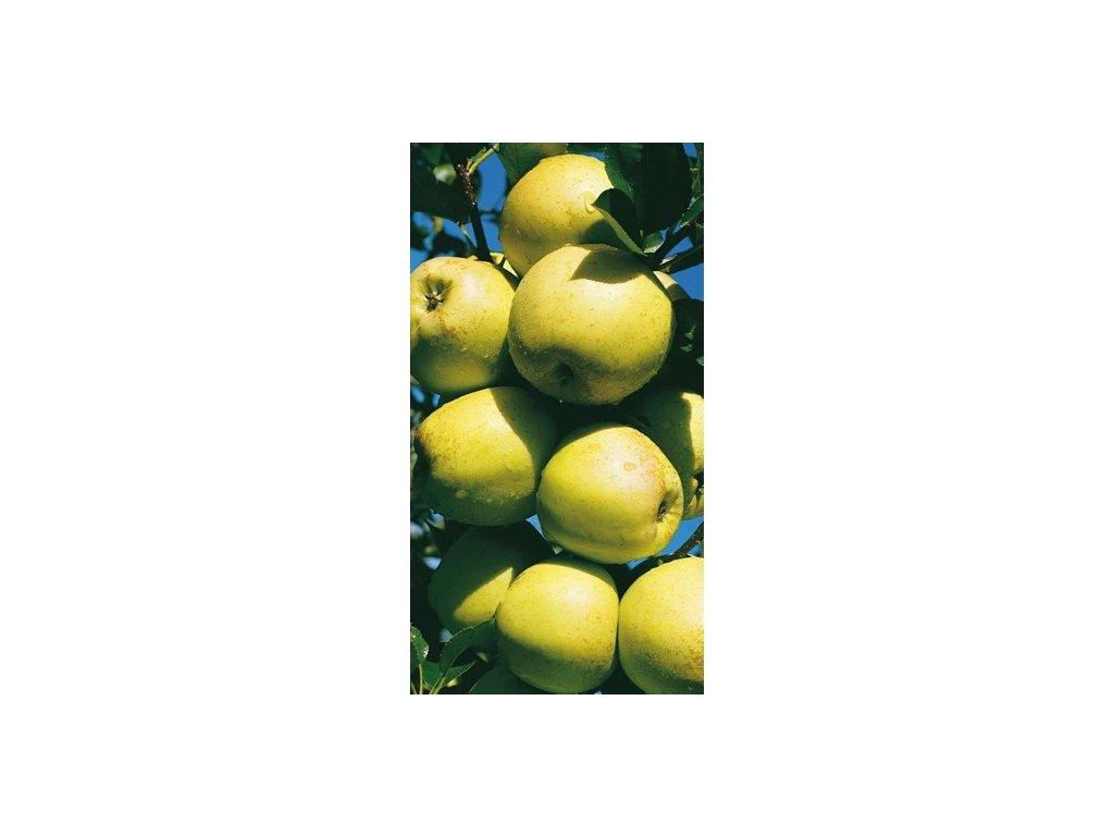 Jabloň Golden Delicious