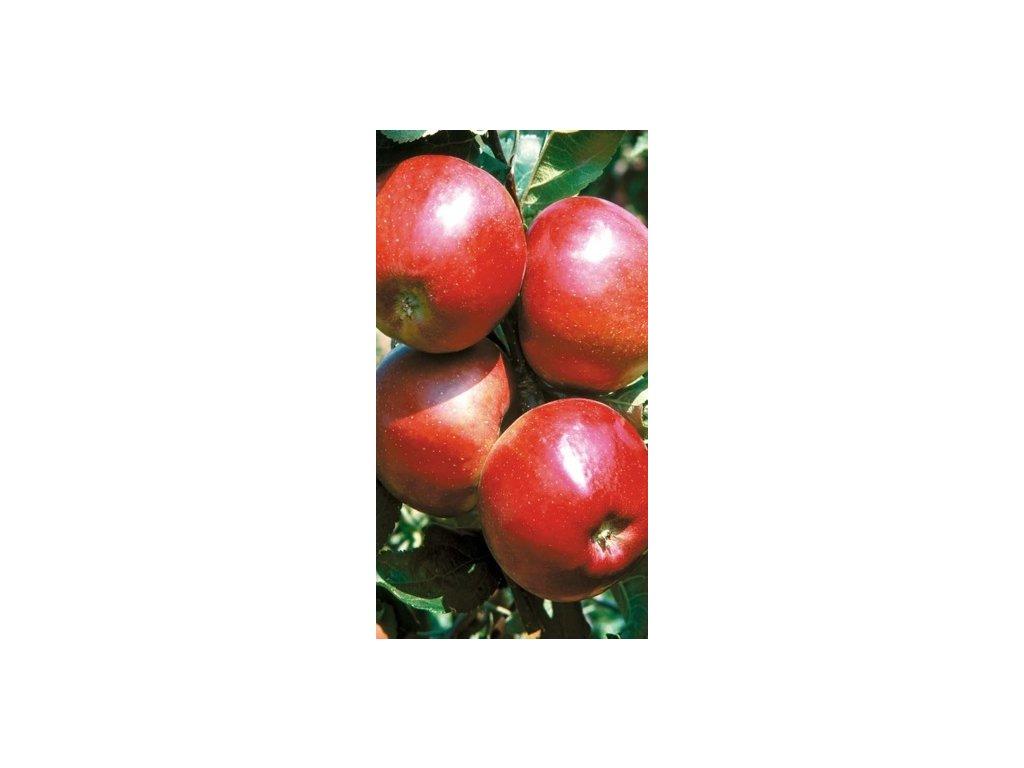 Jabloň Julia