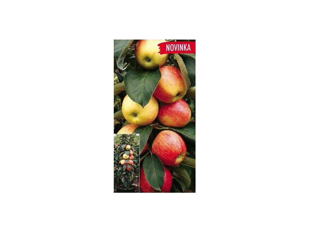 Sloupová jabloň Charlotte