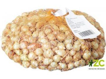 Štutgart sazečka cibule