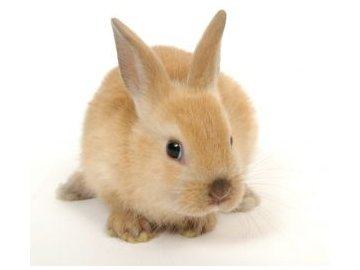 Kompletní krmná směs pro králíky bez antikokcidik - 25 kg