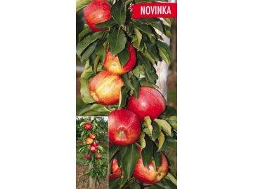 Sloupová jabloň Polka