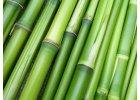 Bambus FAQ